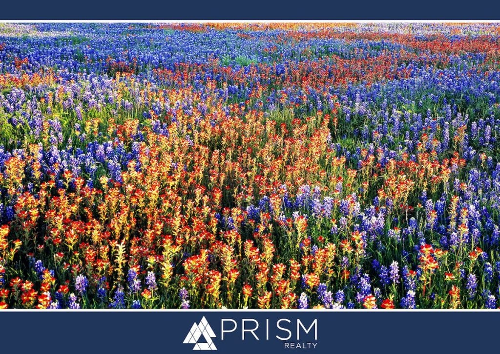 Prism Realty - Where To Admire Spring in Full Bloom in Central Texas - Austin Bluebonnets - Austin Wildflowers - Things to do in Austin Spring 2021 - spring flowers in Central Texas